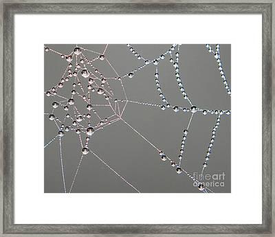 Nature's Webbed Jewel Framed Print by Lloyd Alexander