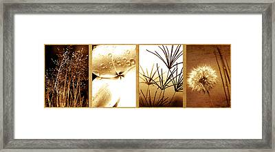 Nature's Window Framed Print by Holly Kempe