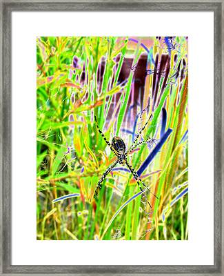 Nature's X Framed Print by Peter  McIntosh