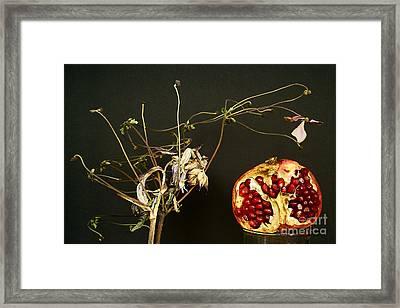 Naturmort With Pomegranate. Framed Print
