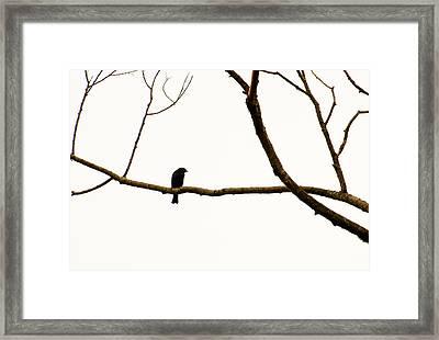 Nature - Bird On A Tree Branch 2 Framed Print by Arthur Babiarz