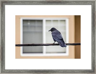 Nature - Crow On Wire Framed Print by Arthur Babiarz