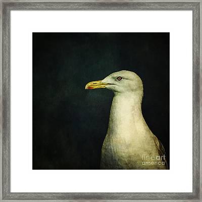 Naujaq Framed Print by Priska Wettstein