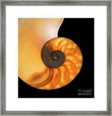 Nautalis Framed Print