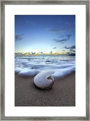 Nautilus By Nature Framed Print by Sean Davey