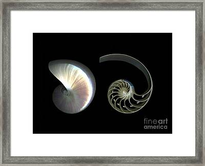 Nautilus Deconstructed Framed Print by Christian Slanec