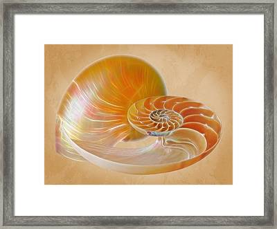 Nautilus Golden Glow Framed Print by Gill Billington