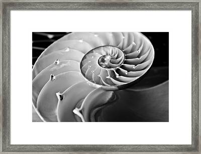 Nautilus In Black And White Framed Print