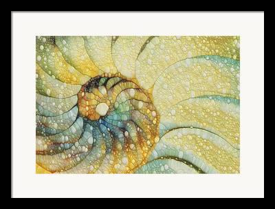 Marine Mollusc Paintings Framed Prints