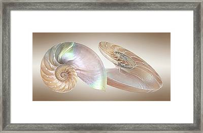 Nautilus Natural Jewel Of The Sea Framed Print by Gill Billington