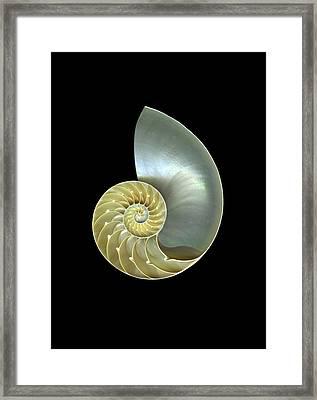 Nautilus Nr.1 Framed Print by Christian Slanec