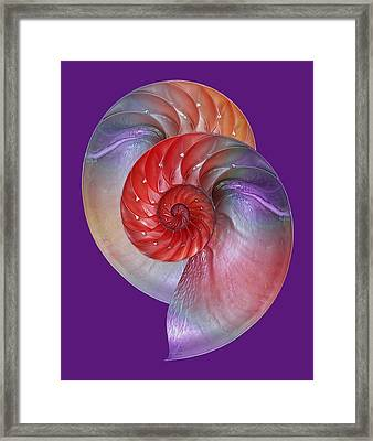 Nautilus Passion Framed Print by Gill Billington
