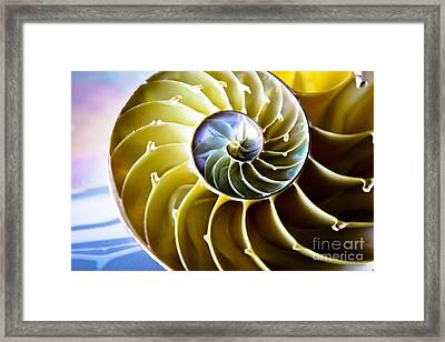 Nautilus Pompilius Framed Print by Colleen Kammerer