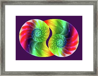 Nautilus Rainbow Framed Print by Gill Billington