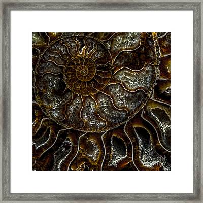 Nautilus Shell Fossil Framed Print