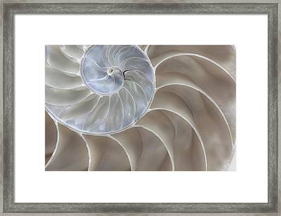 Framed Print featuring the photograph Nautilus Shell II by John Hix