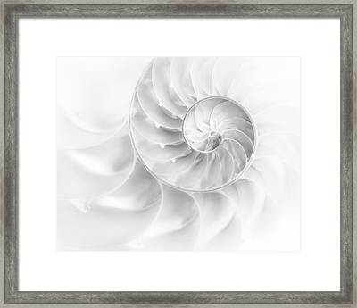 Nautilus Shell In High Key Framed Print by Tom Mc Nemar