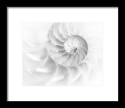 Molluscs Framed Prints