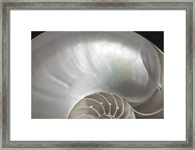 Nautilus Shell Framed Print by John Hix