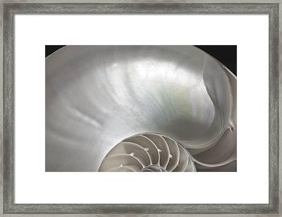 Nautilus Shell Framed Print