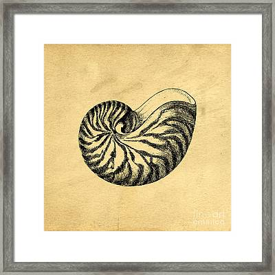 Nautilus Shell Vintage Framed Print by Edward Fielding