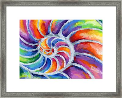 Nautilus Framed Print by Stephen Anderson