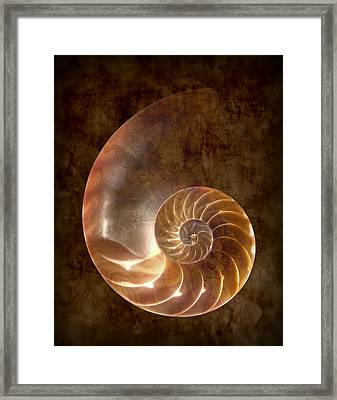 Nautilus Framed Print by Tom Mc Nemar