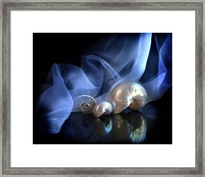 Nautilus Trio Framed Print by Linda Olsen