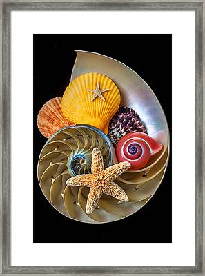 Nautilus With Sea Shells Framed Print