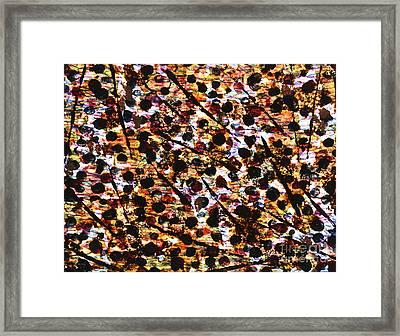 Near De Vine Framed Print by TB Schenck