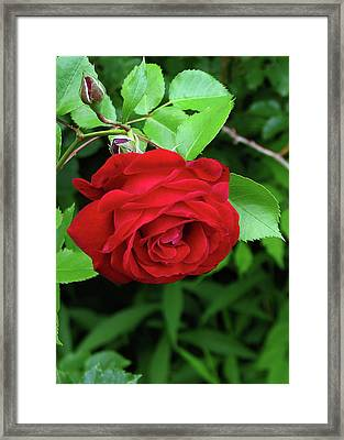 Nearly Perfect Framed Print by Deborah Johnson