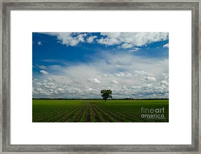 Nebraska Cornfield Framed Print