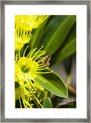 Nectar Bloom Framed Print by Jorgo Photography - Wall Art Gallery