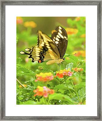 Nectar Collection Framed Print