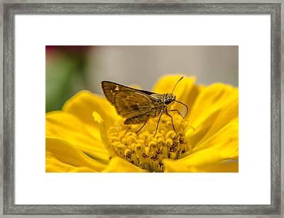 Nectar Delight Framed Print