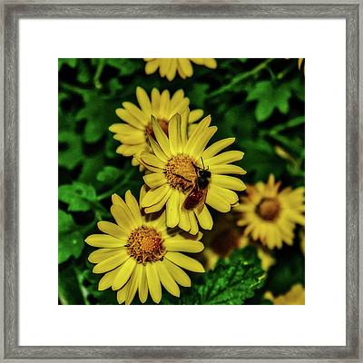 Nectar Gathering Framed Print