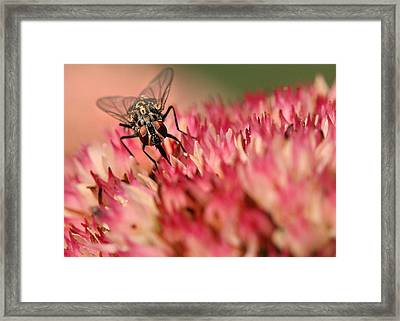 Nectar Hunt Framed Print
