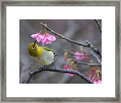 Nectar Framed Print by Karen Walzer