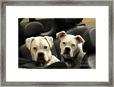 Need A Lift Framed Print by Marc Bittan