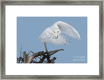 Peek - A - Boo Framed Print by Heather King