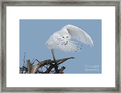 Peek - A - Boo Framed Print