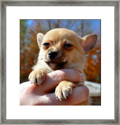 Need Somebody To Love Framed Print