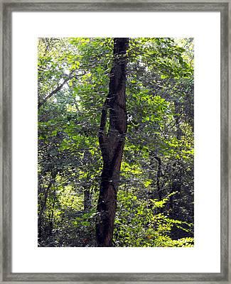 Needle Hook Tree Framed Print by Eva Thomas
