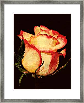 Needlepoint Rose Framed Print by Cathie Tyler