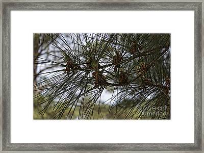 Needles Attached Framed Print by Roberta Byram