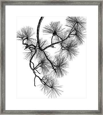 Needles II Framed Print