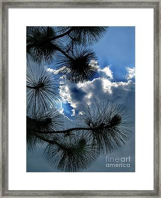 Needles In The Clouds Framed Print by Skip Willits