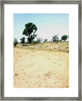 Neem Tree At Farm Framed Print by Ram Singh