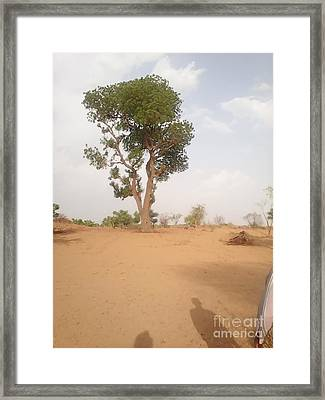 Neem Tree At The Desert  Framed Print