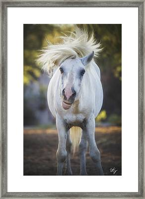 Neeyyy What Framed Print by Peter Coskun